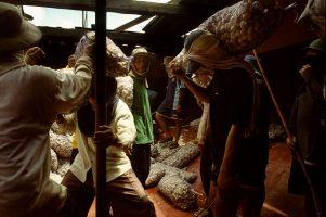 Pour quelques euros, des ouvriers, payés « au sac transporté » chargent et déchargent à longueur de journée les cargos chinois.