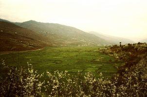 Au Sichuan, la vallée de la Dadu va être engloutie sous les eaux du barrage de Pubuguo. 100 000 paysans y cultivent leurs terres.Ils doivent leur survivance à leur terroir d'une qualité rare, où trois récoltes sont possibles. Demain, ils seront expulsés de la terre de leurs ancêtres.